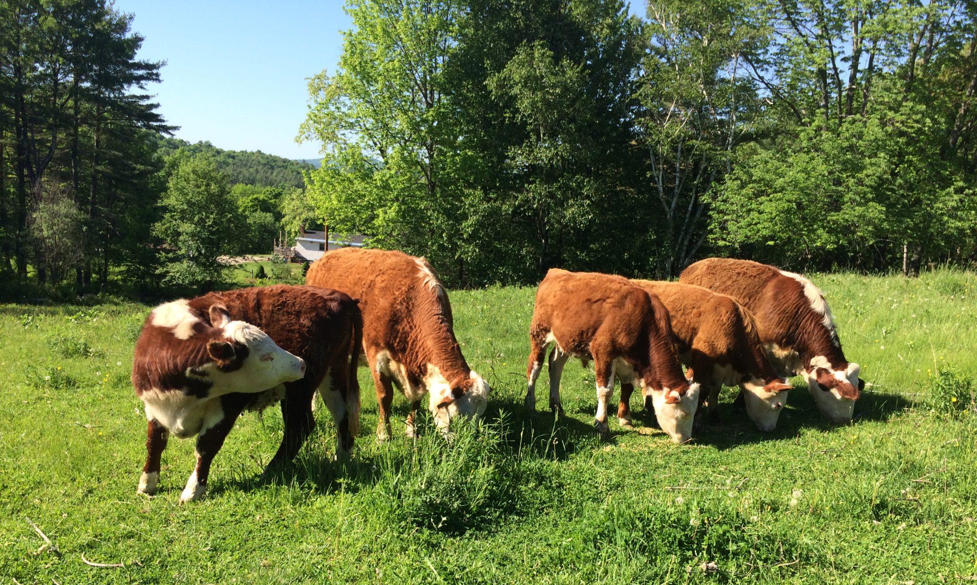 Hicks Farm Pastures
